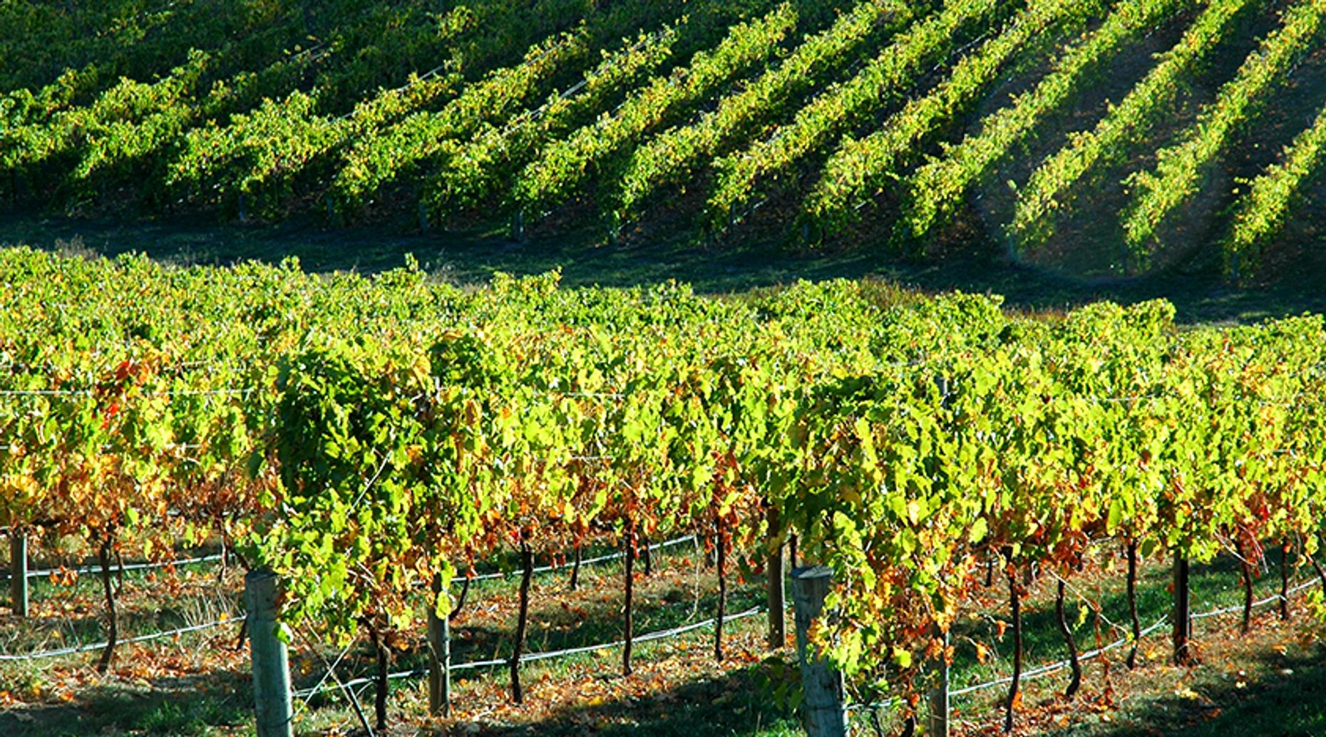 Tour of Three Wineries on Horseback in Temecula