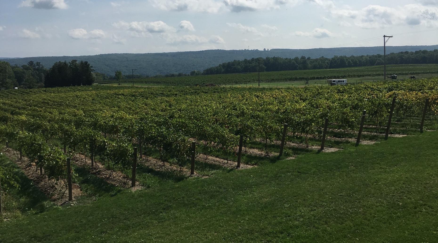 6-Hour Custom Finger Lakes Wine Tour