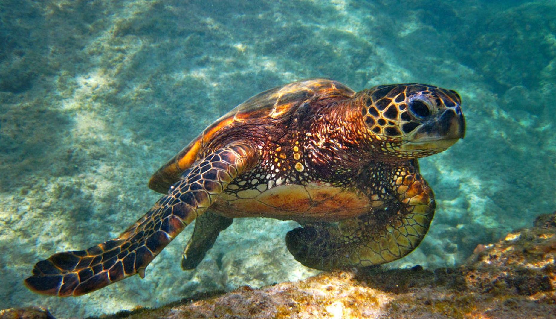 Reef Snorkeling Tour in Nassau