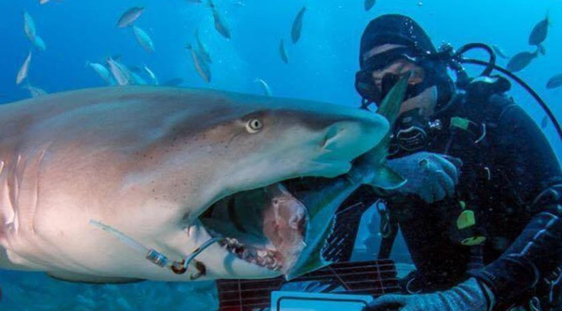 6-Pack Shark Dive in Jupiter