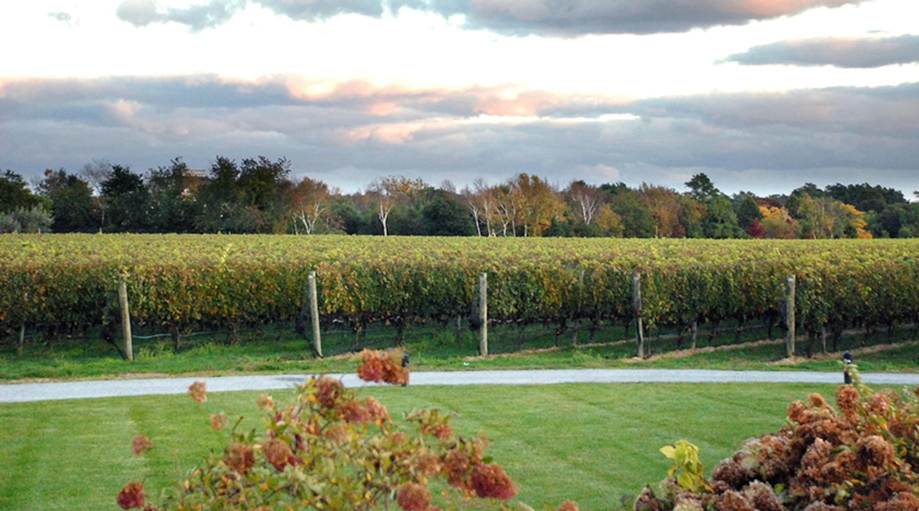 Winery Tour & Tasting in Hillsboro