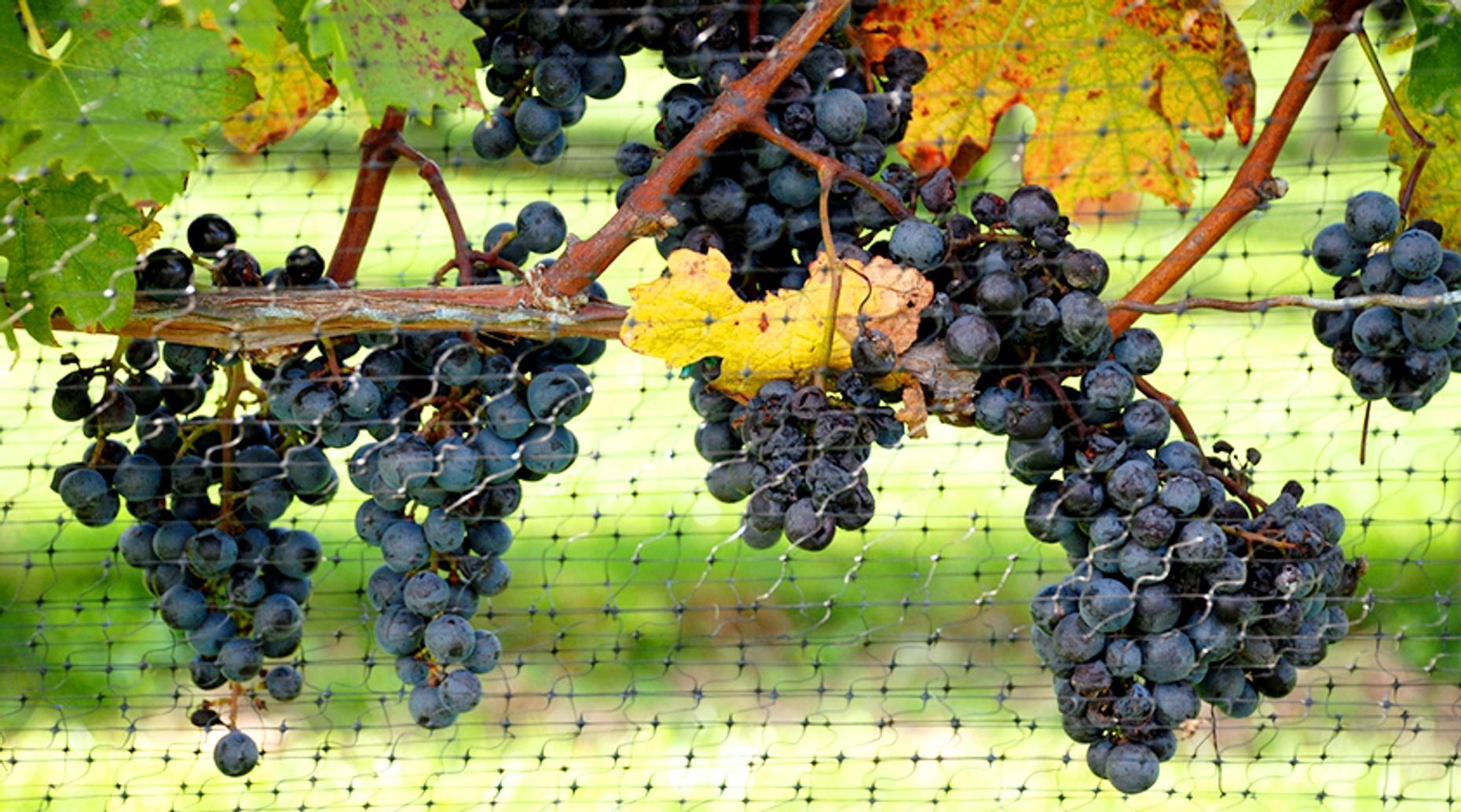 Duneland Wine Tasting Room Trail
