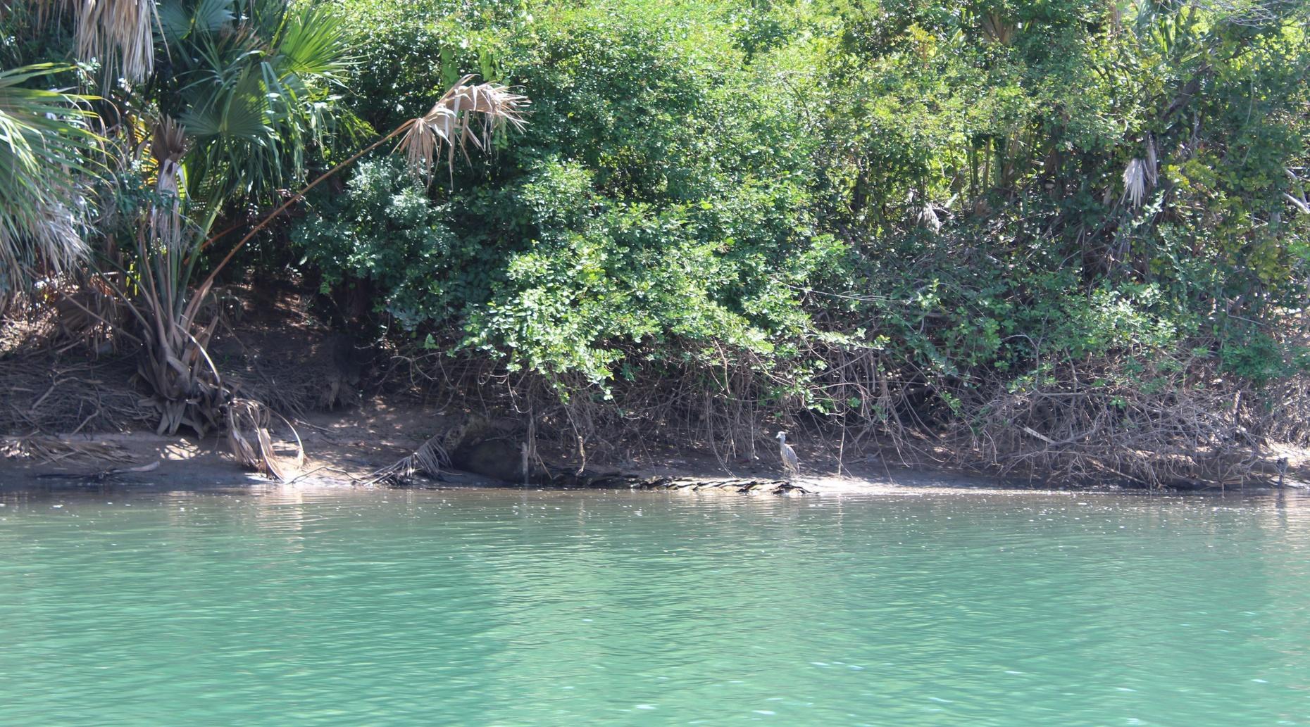 Manialtepec Lagoon Boat Tour