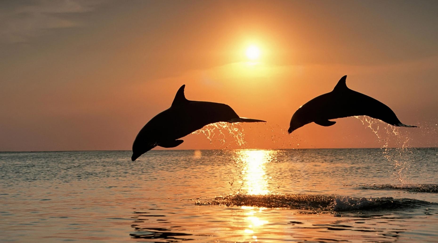 Sunset Dolphin Cruise on Orange Beach