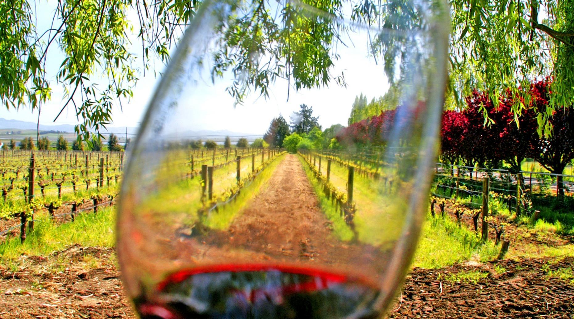 Full-Day Sonoma Dry Creek Bike & Wine Tour