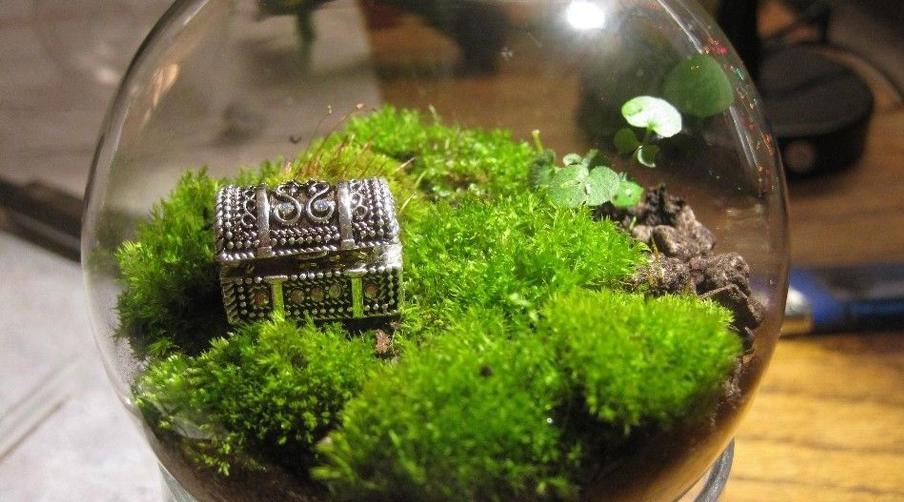 Guided Terrarium-Making Class in Hoboken