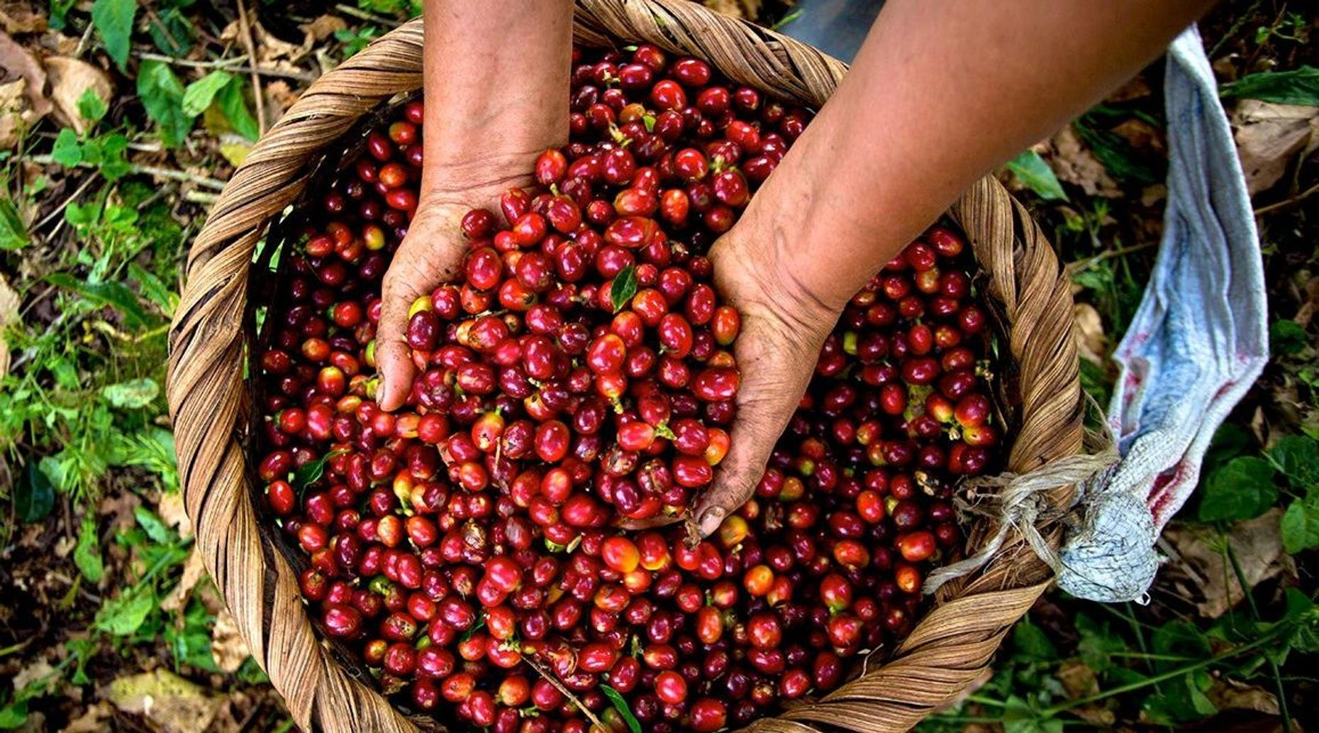 2-Hour Coffee Tour in Costa Rica