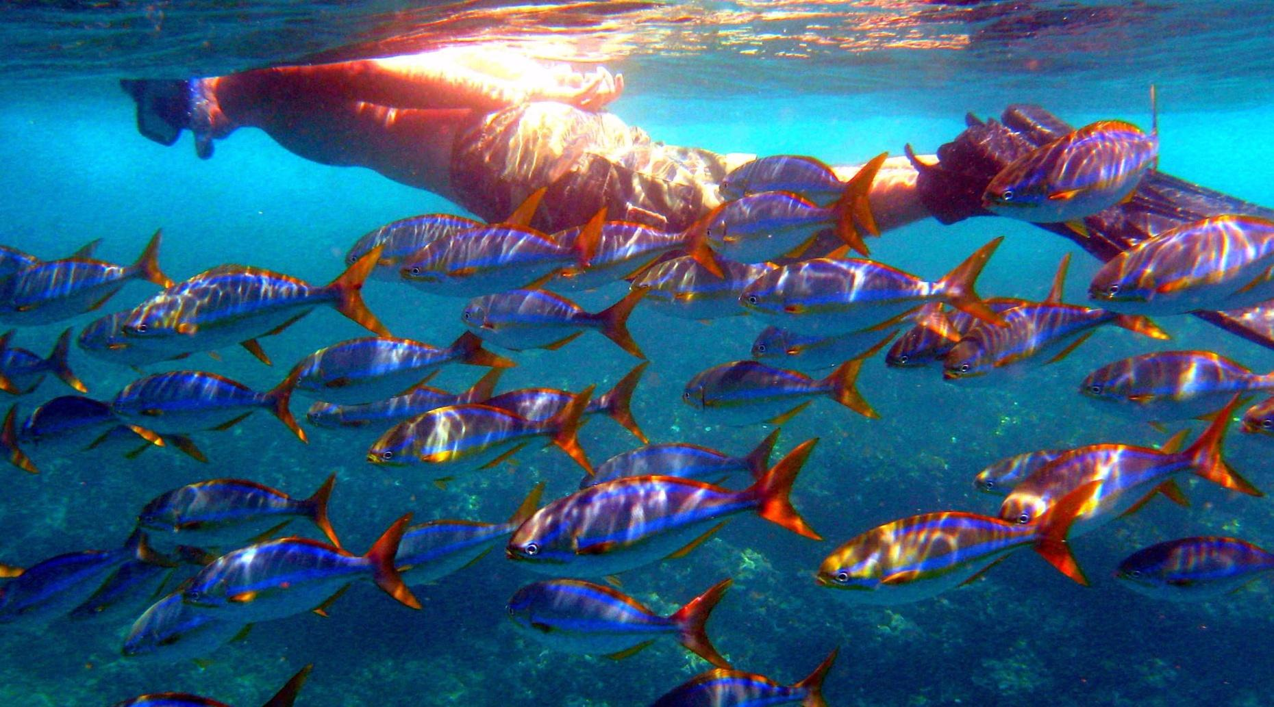 Private Morning Snorkeling & Sailing Tour in Costa Rica