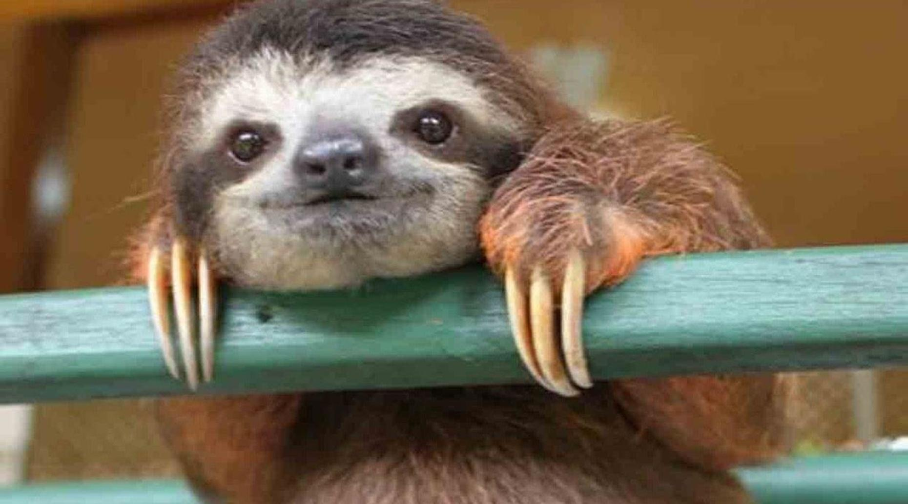 Pet & Feed Sloths at a Zoo in Lambertville