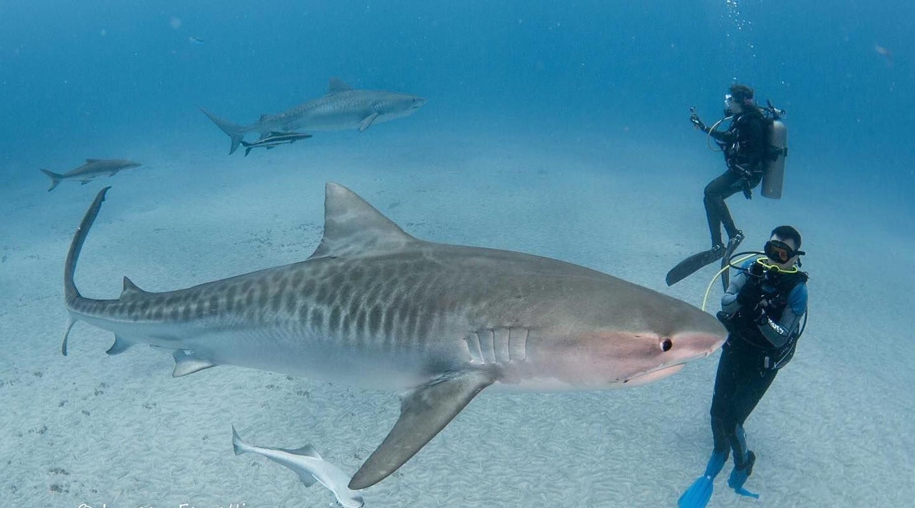 Shark and Wreck Dives in Jupiter