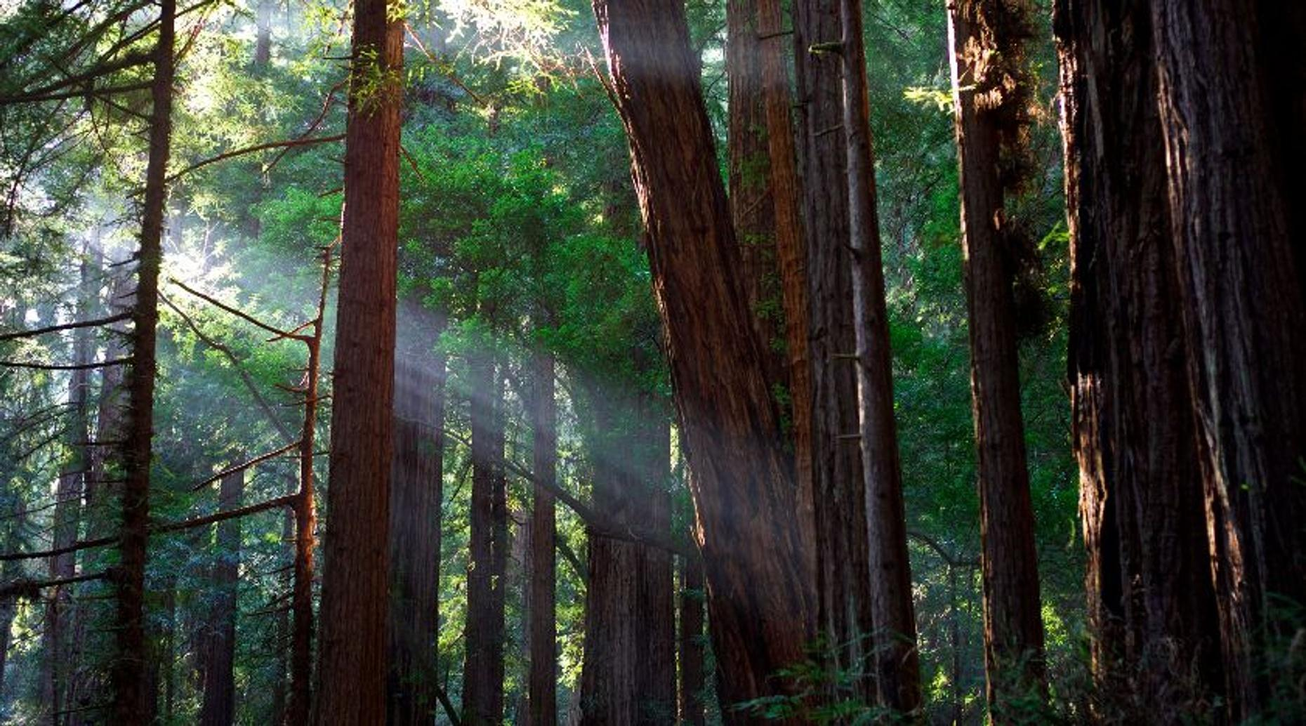 Muir Woods and Sausalito Guided Combo Tour