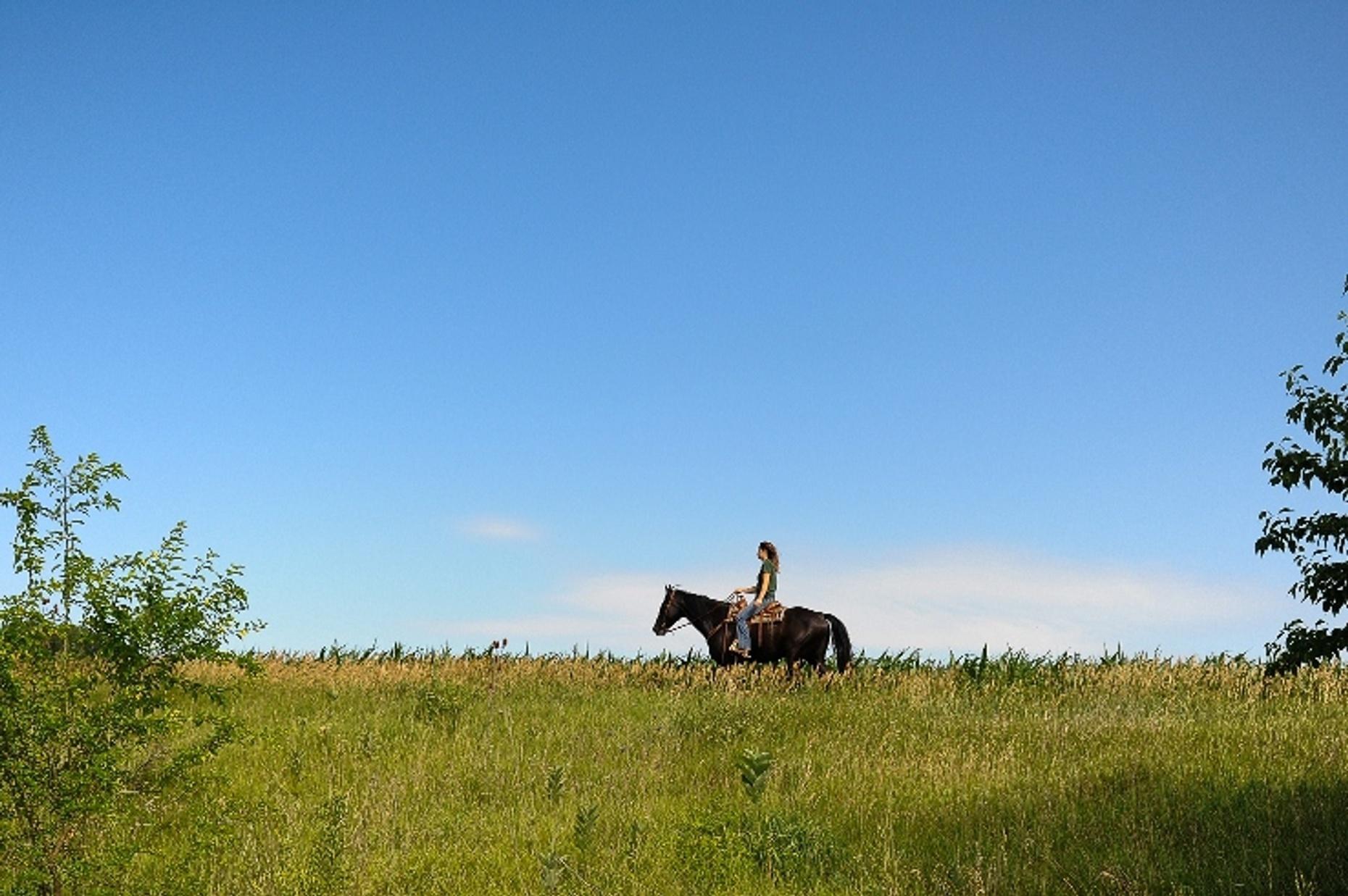 One Hour Sunset Horseback Ride in Millbrook