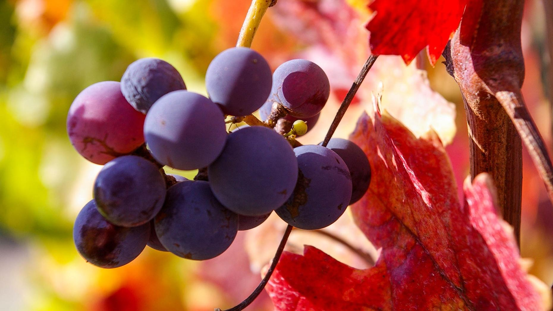 Napa & Sonoma Guided Full-Day Wine Tour