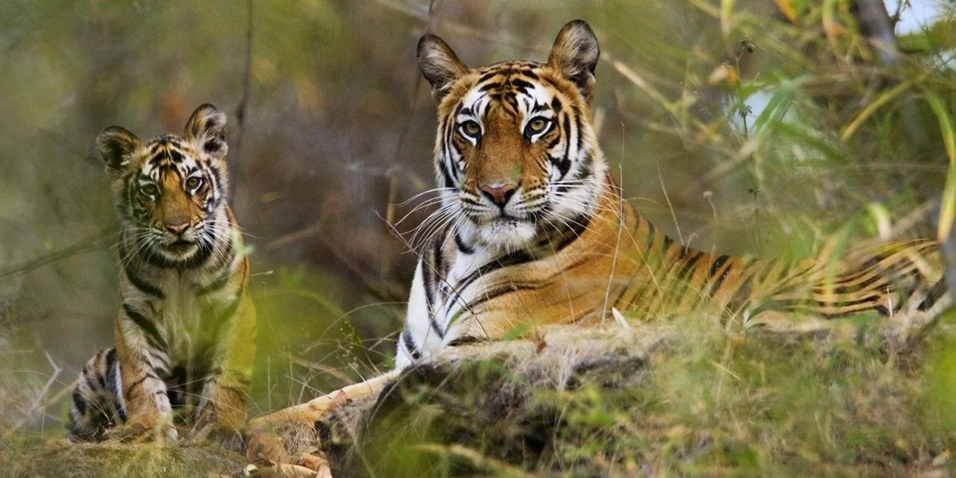 9-Day Wildlife Tour of Central India