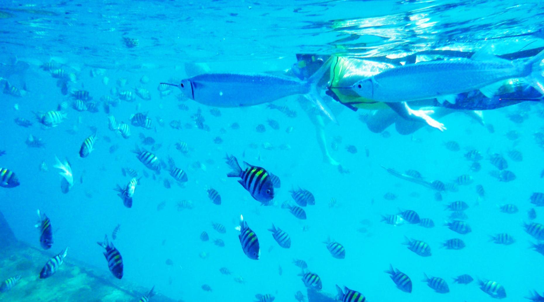 Los Arcos Snorkeling Tour