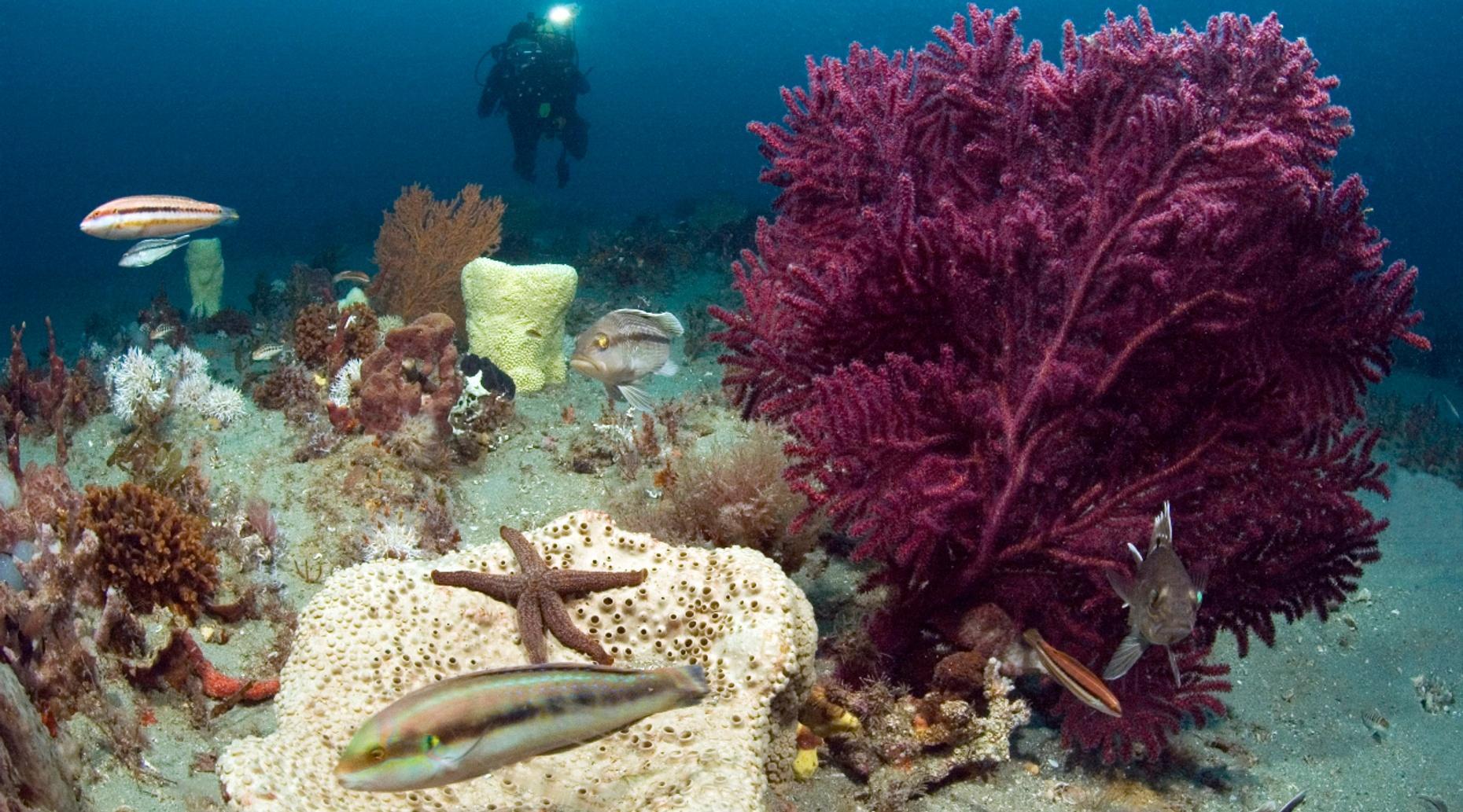Two-Dive Caribbean Adventure
