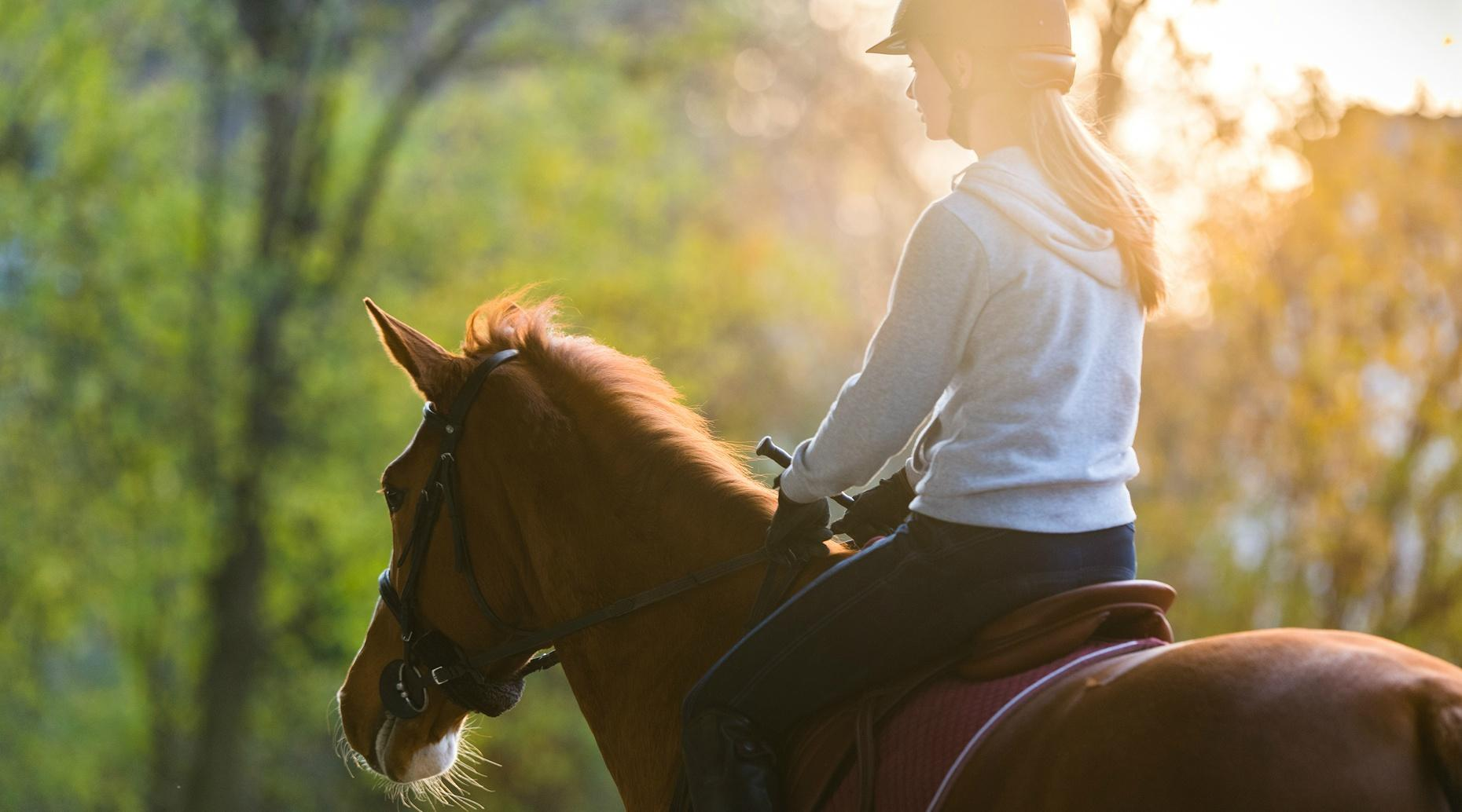 50-Minute Horseback Trail Ride in Morrilton