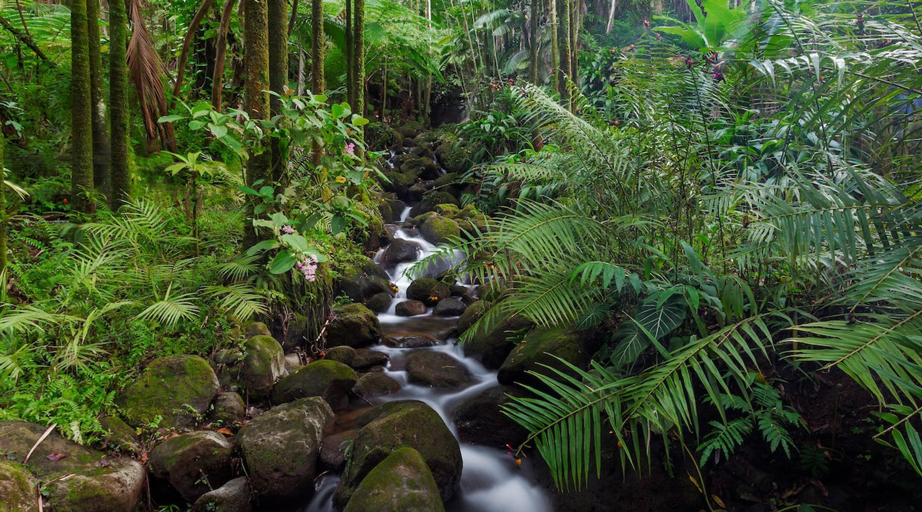 Big Island Full Day Photo EcoTour