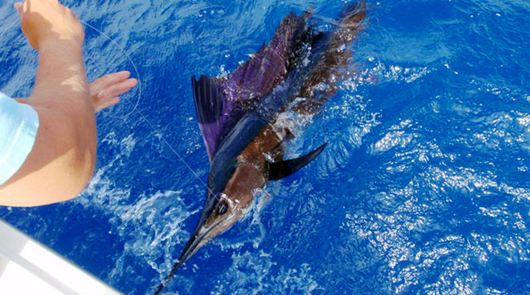 Full-Day Swordfish Fishing Charter in Miami