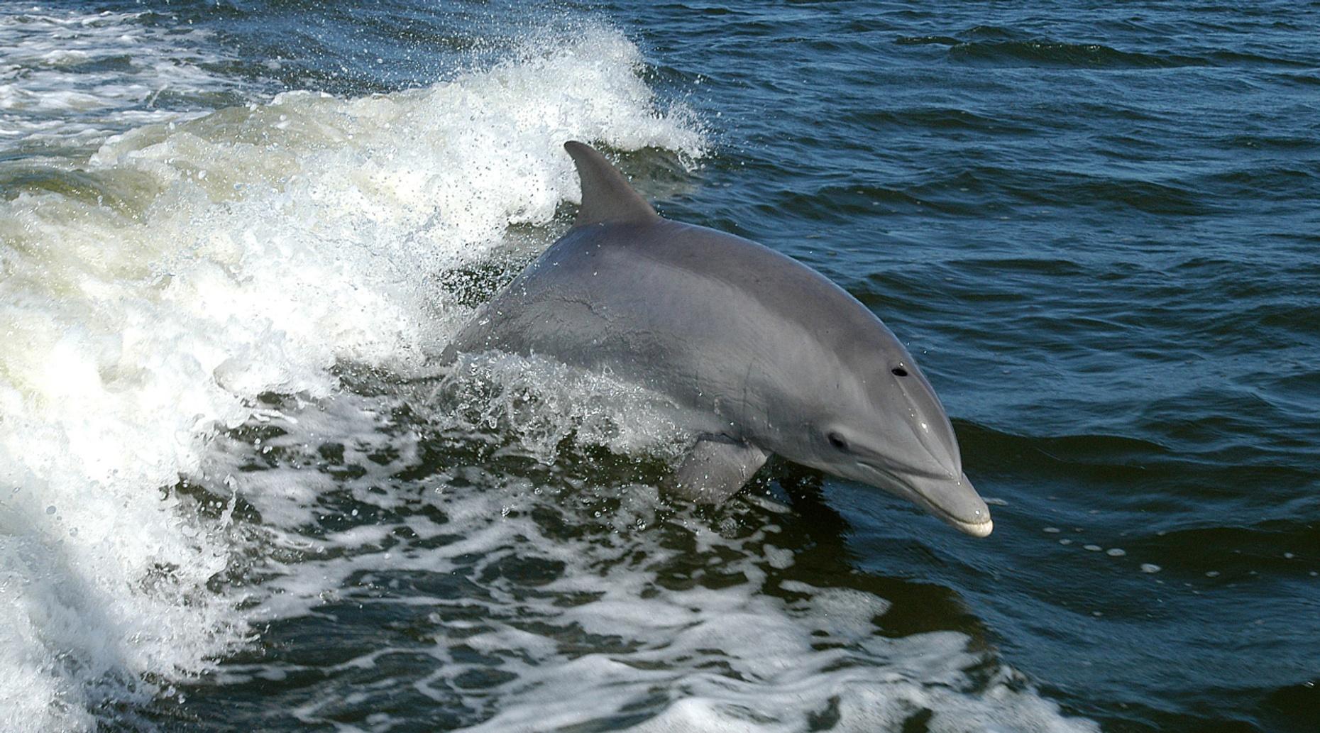 Daufuskie Island Midday Ferry Tour