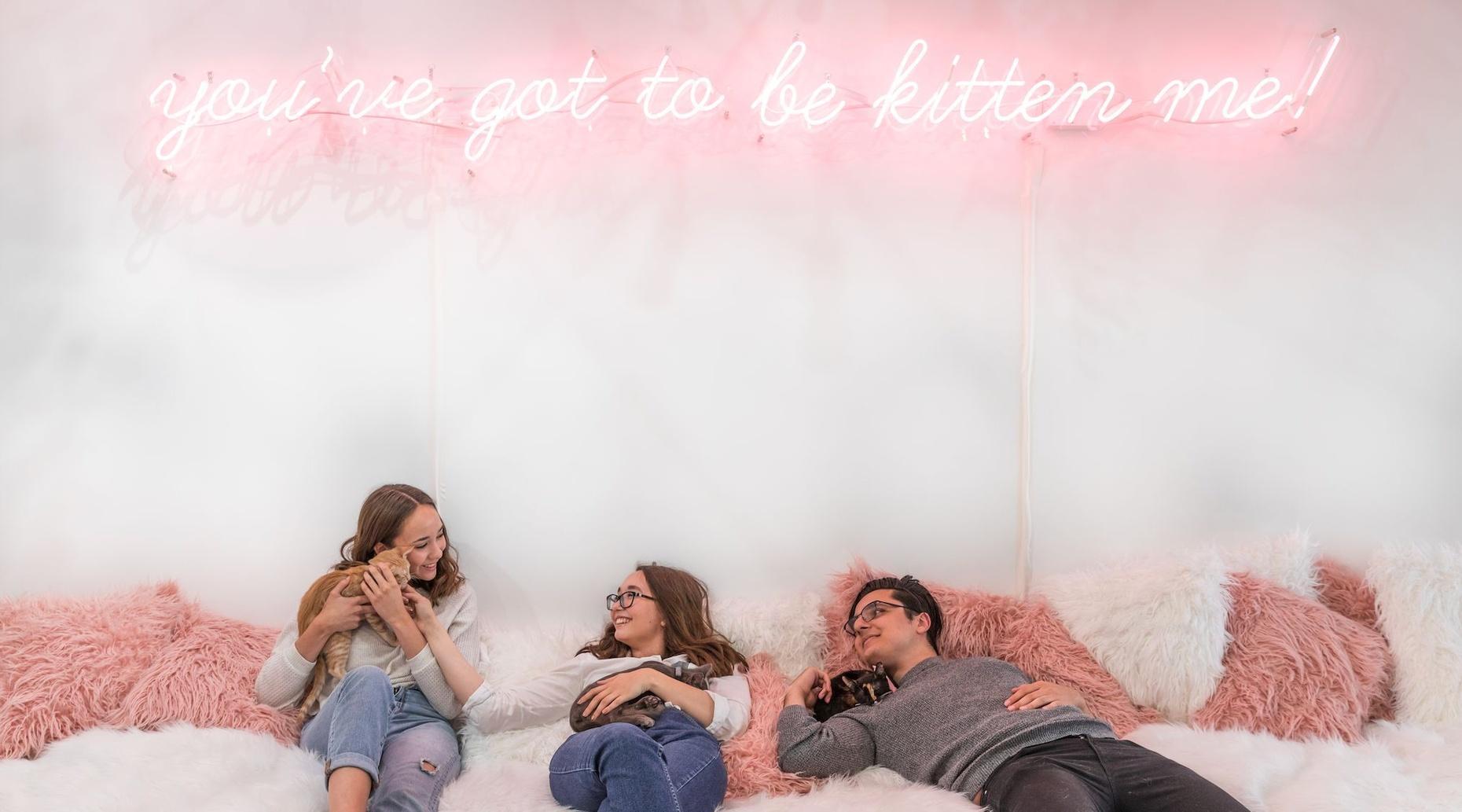 70 Minute Kitten Extravaganza - The Kitten Lounge