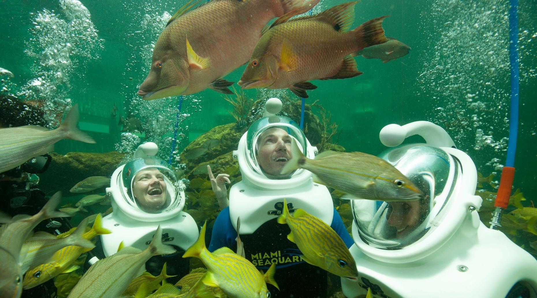 Sea Trek Reef Encounter at Miami Seaquarium