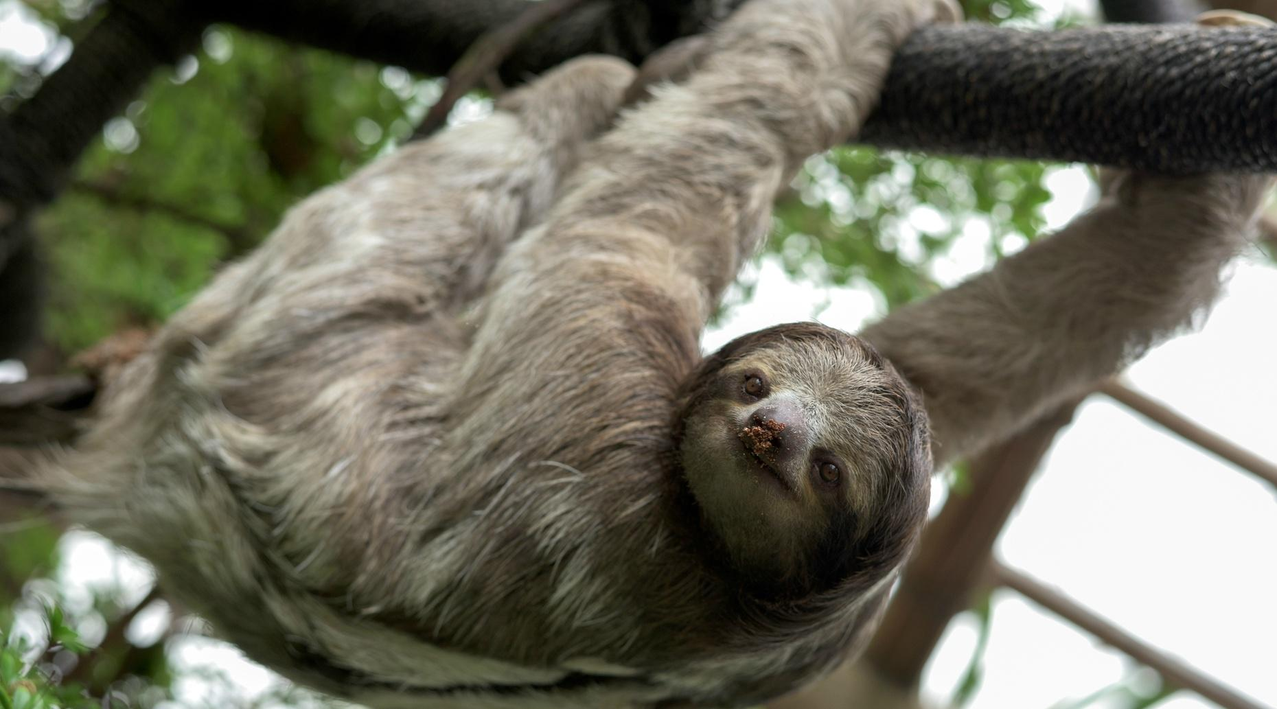 VIP Sloth Encounter in Orlando