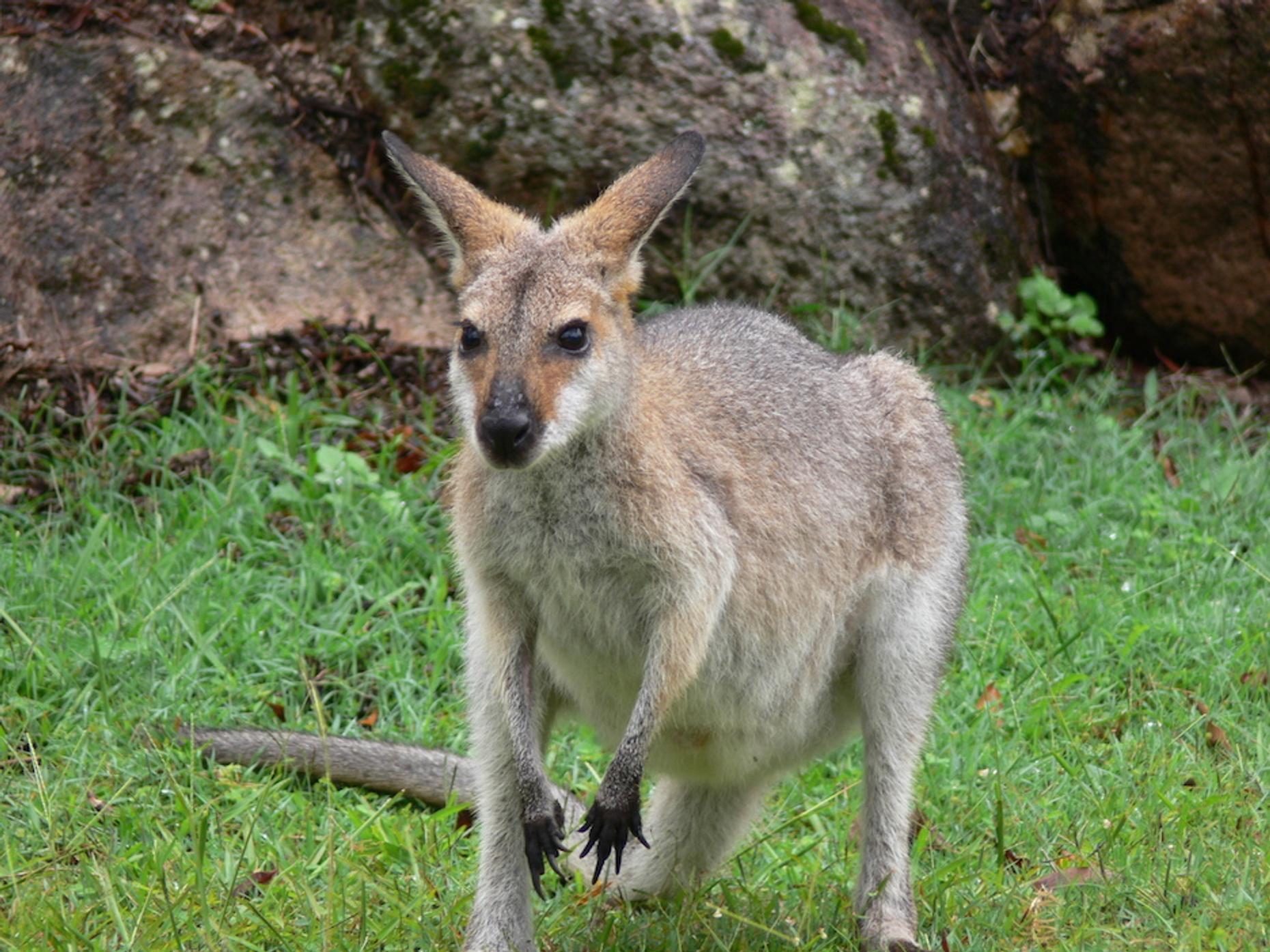 Kangaroo Encounter at a Zoo in Georgia