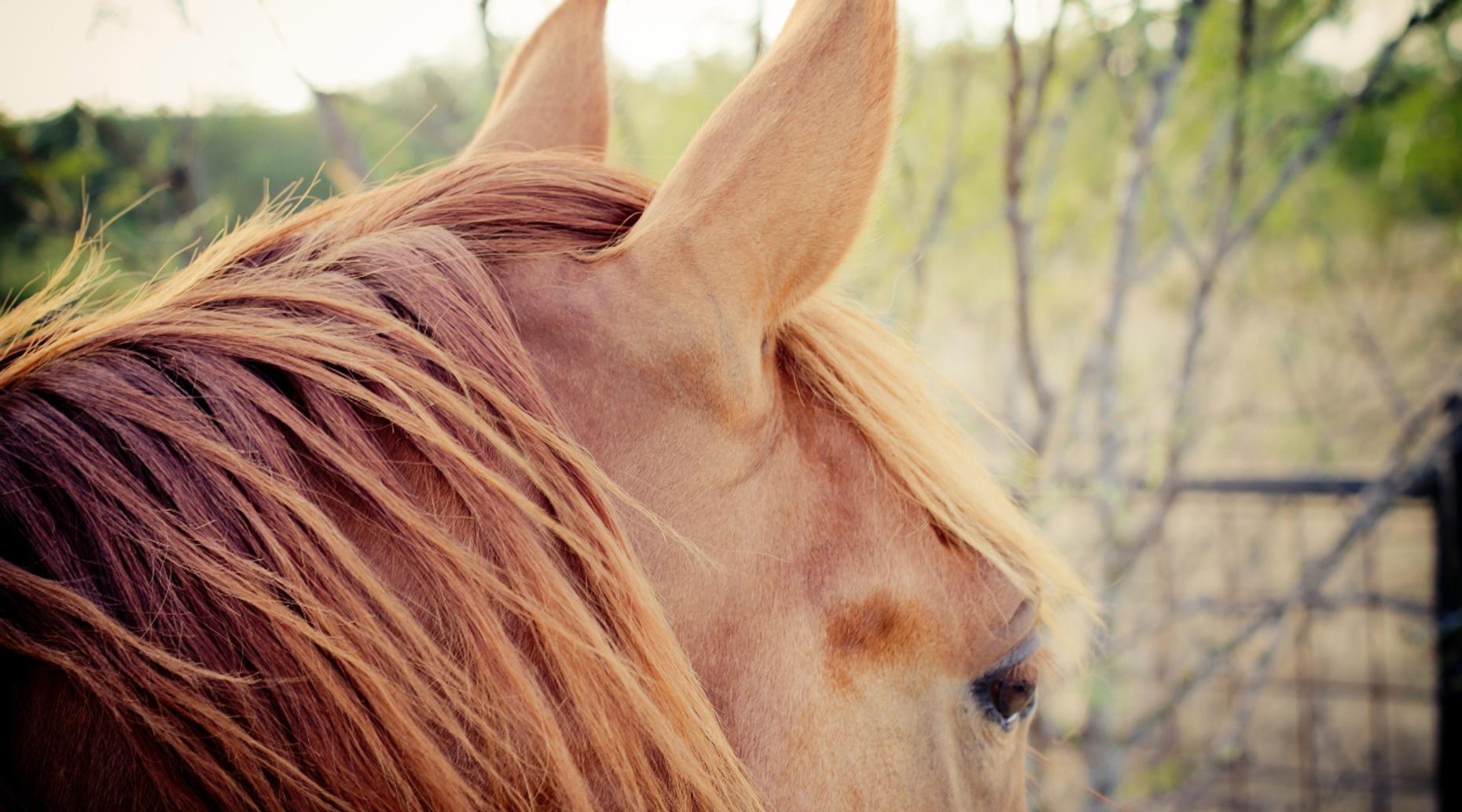 Horse Camp for Kids in Boulder City