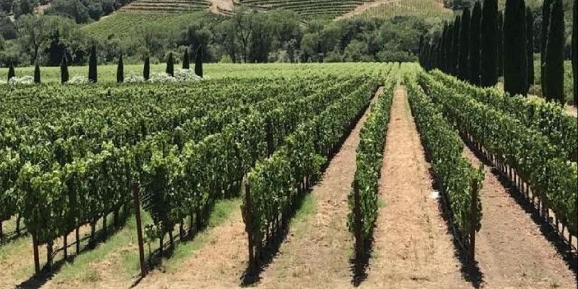 Great Wine Tour of Sonoma Valley | Public