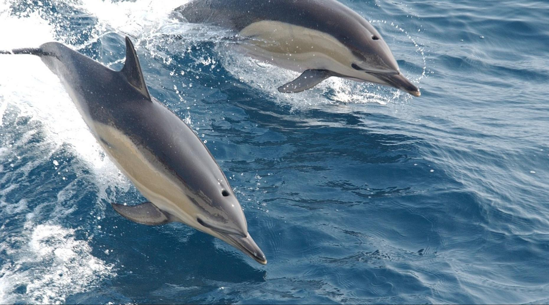 Two-Hour Daytime Dolphin Cruise from Pensacola Beach