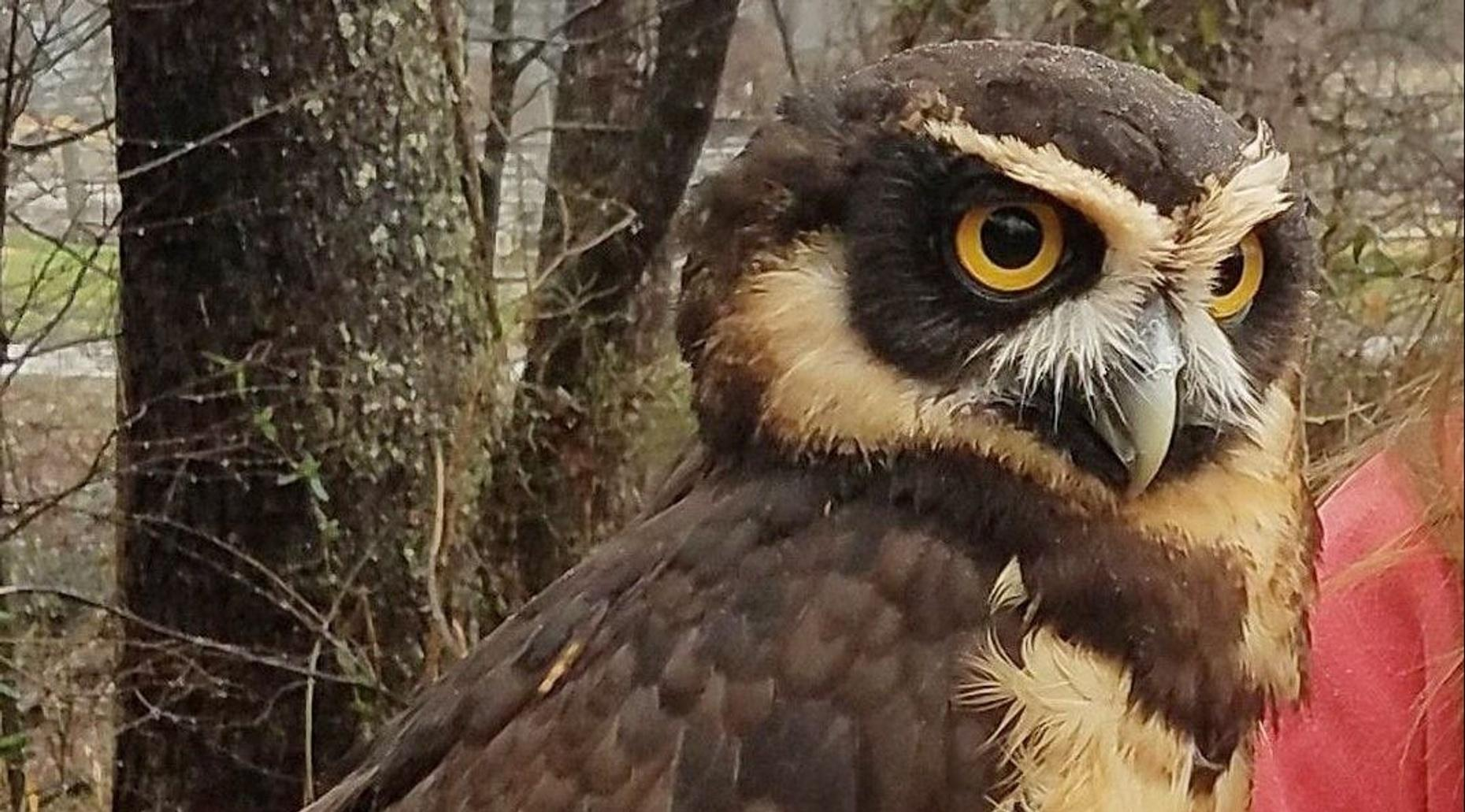 Owl and Friends Encounter in Cleveland