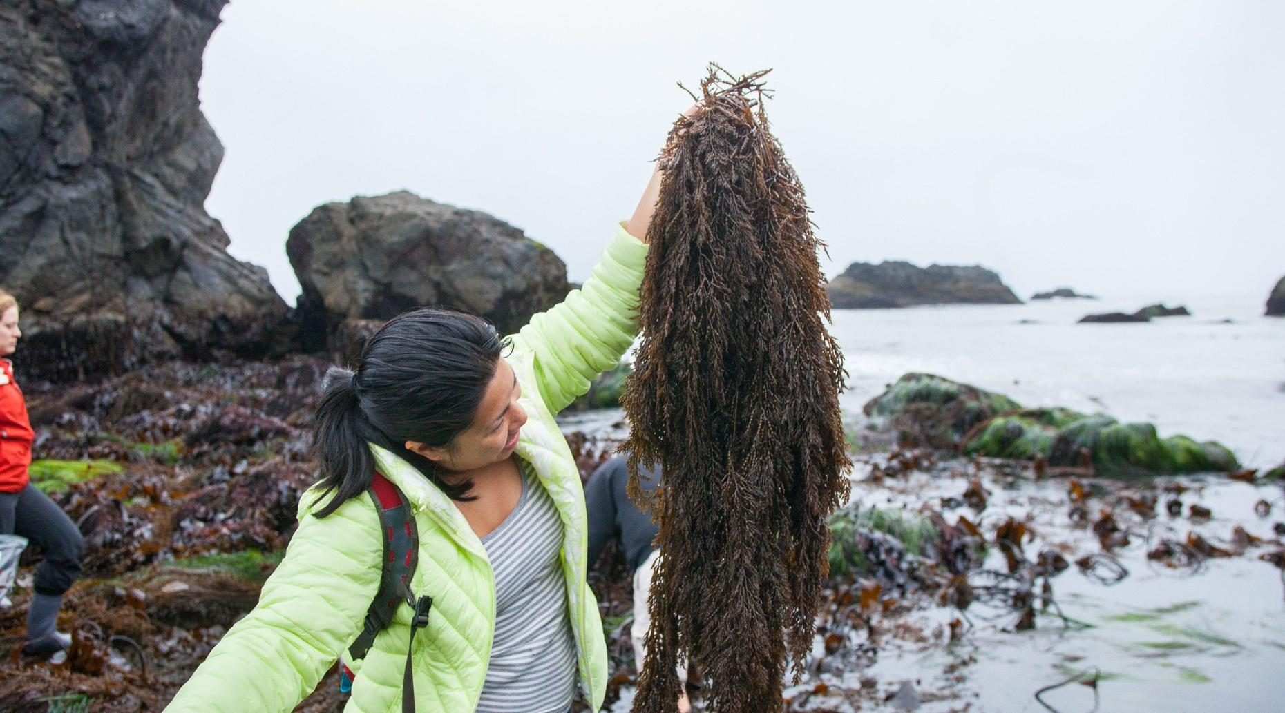 Two-Hour Sonoma Seaweed Foraging Class
