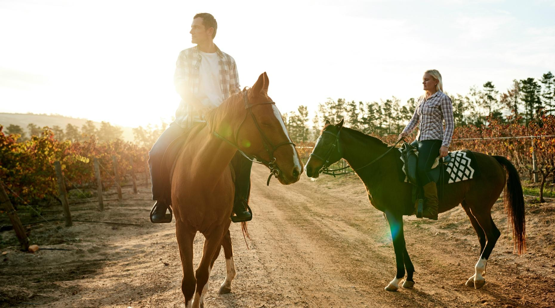 30-Minute Napa Vineyard Horseback Ride
