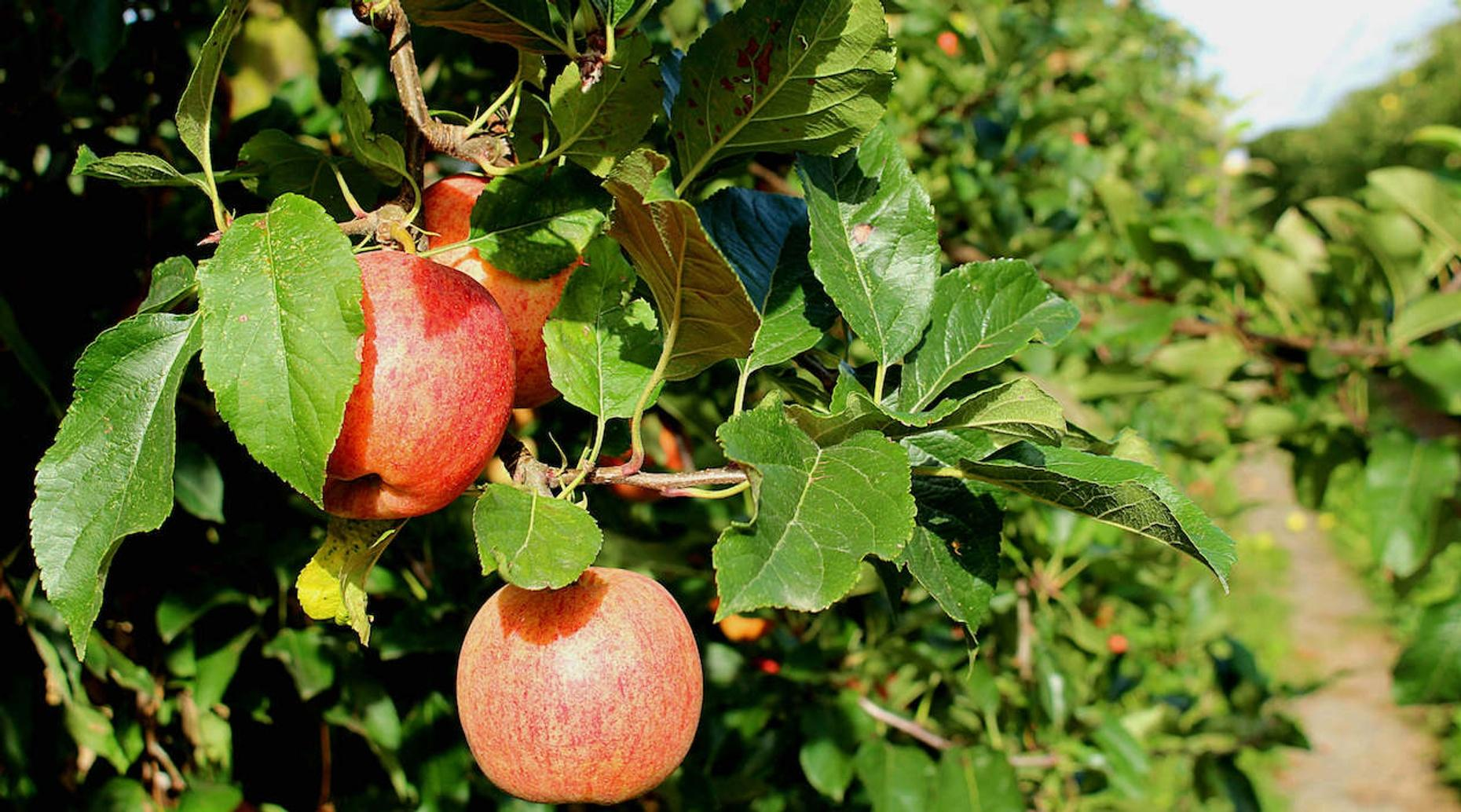 Morgan Hill Orchard Tour & Tasting for the Culinary Trades
