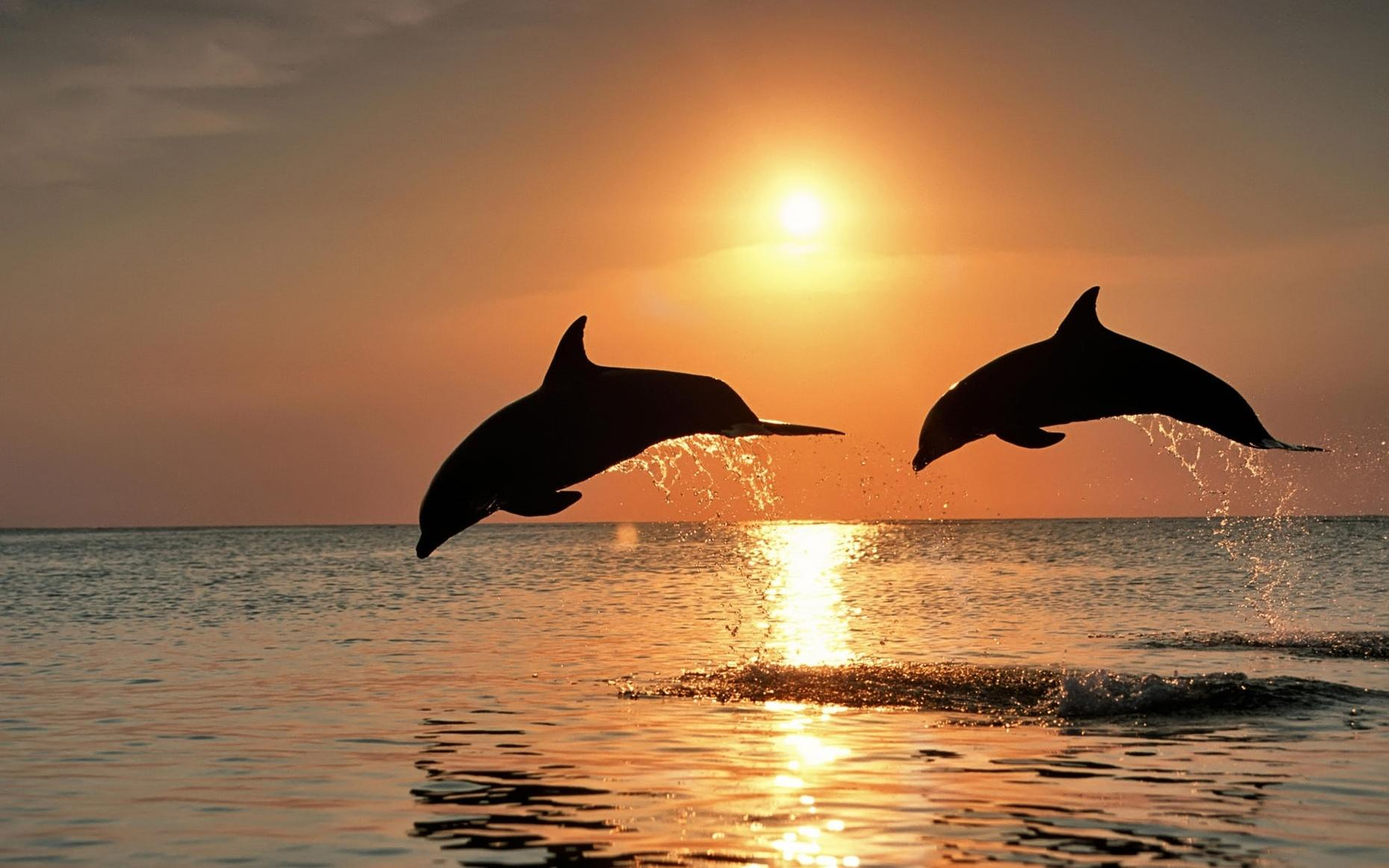Two Hour Sunset Dolphin Cruise at Pensacola Beach