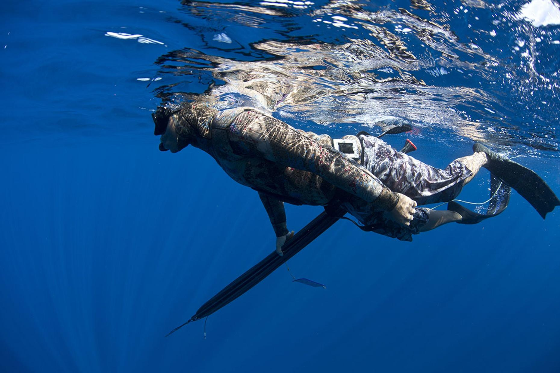Reef Spearfishing Adventure in Cabo San Lucas