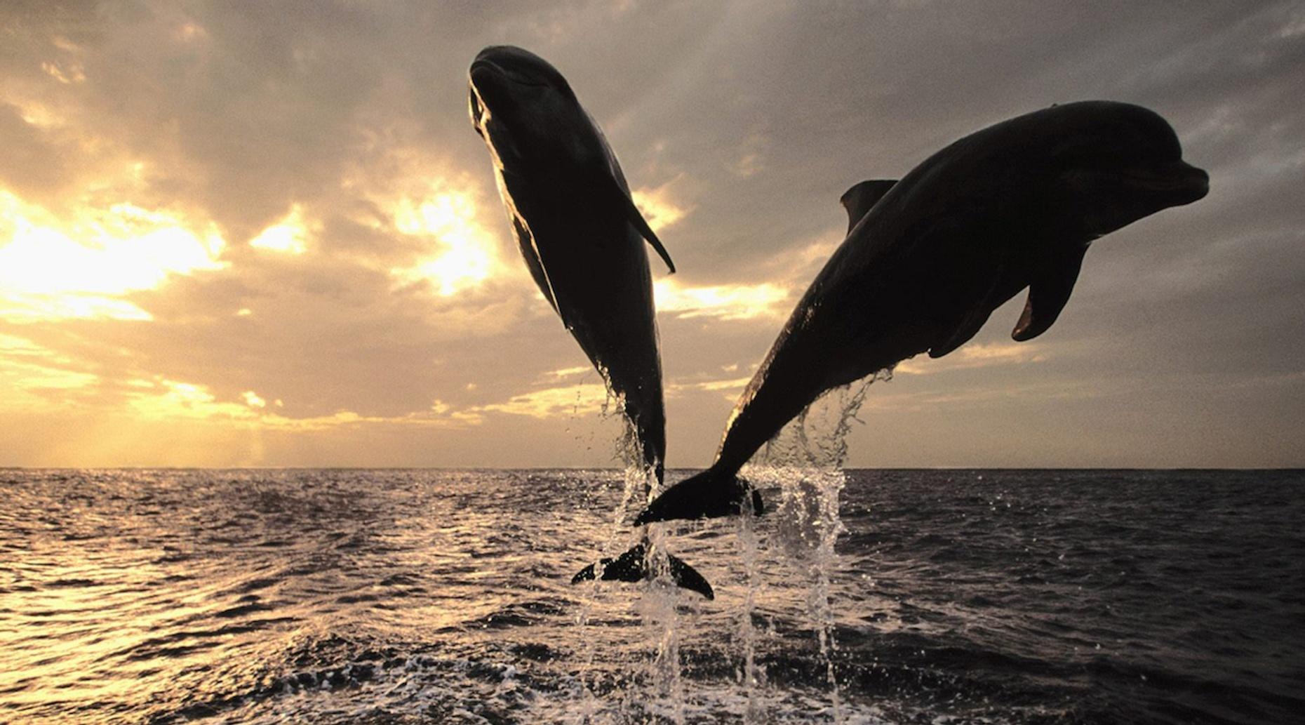 Two-Hour Sunset Dolphin Cruise on Destin Harbor