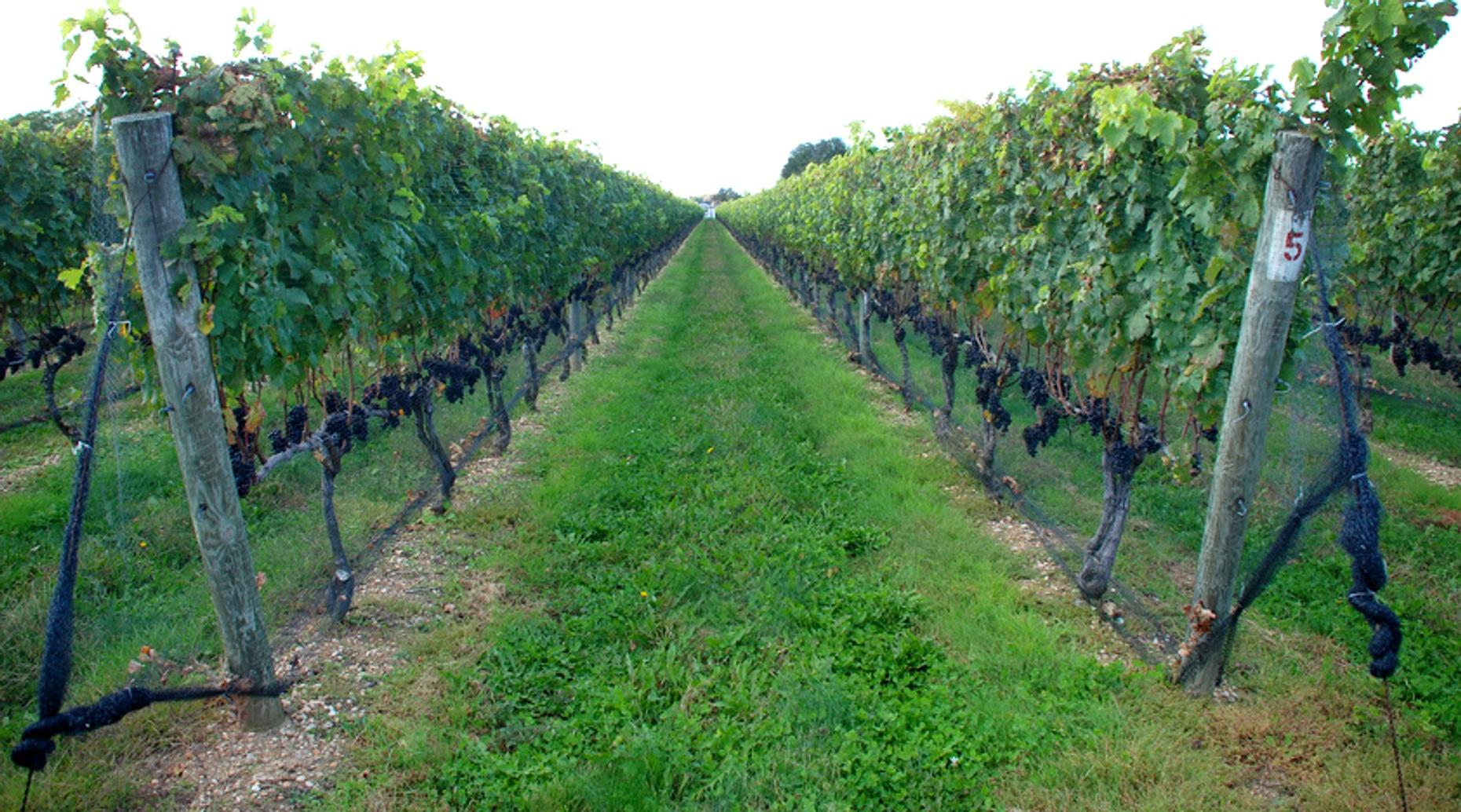 Five Hour Winery Tour in North Bay