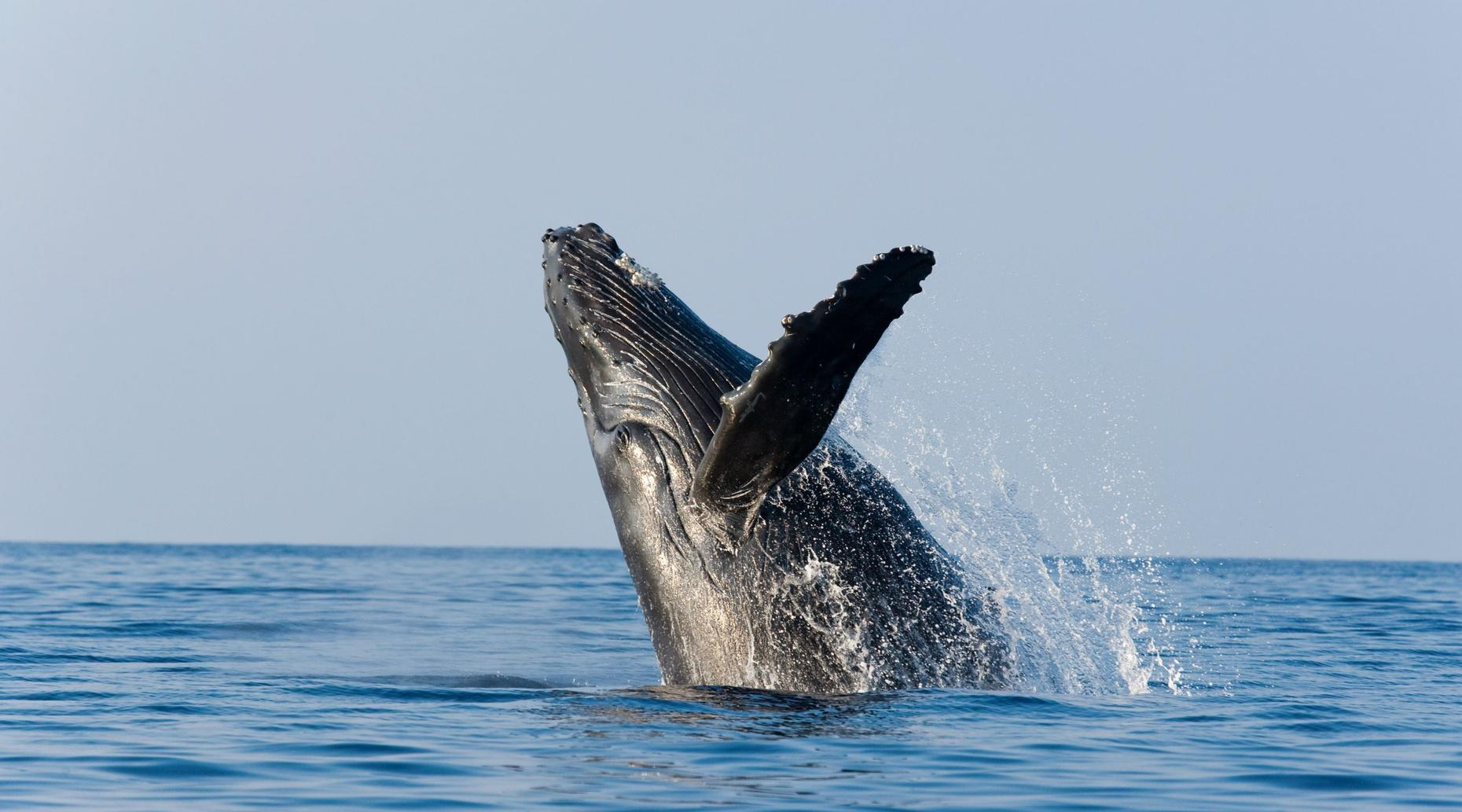 Morning Whale Watch & Breakfast from San Diego