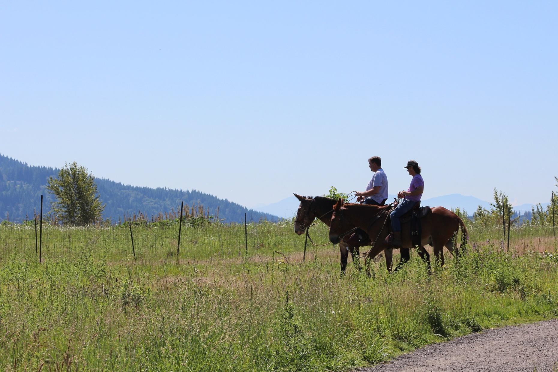 Two Hour Horseback Ride Through Wells Gray Park