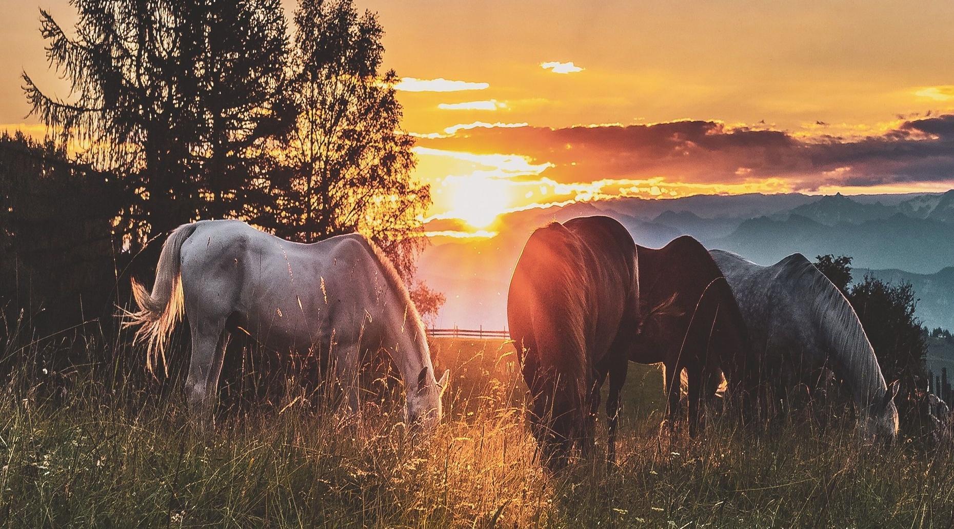 Horseback Trail Ride in Marionville