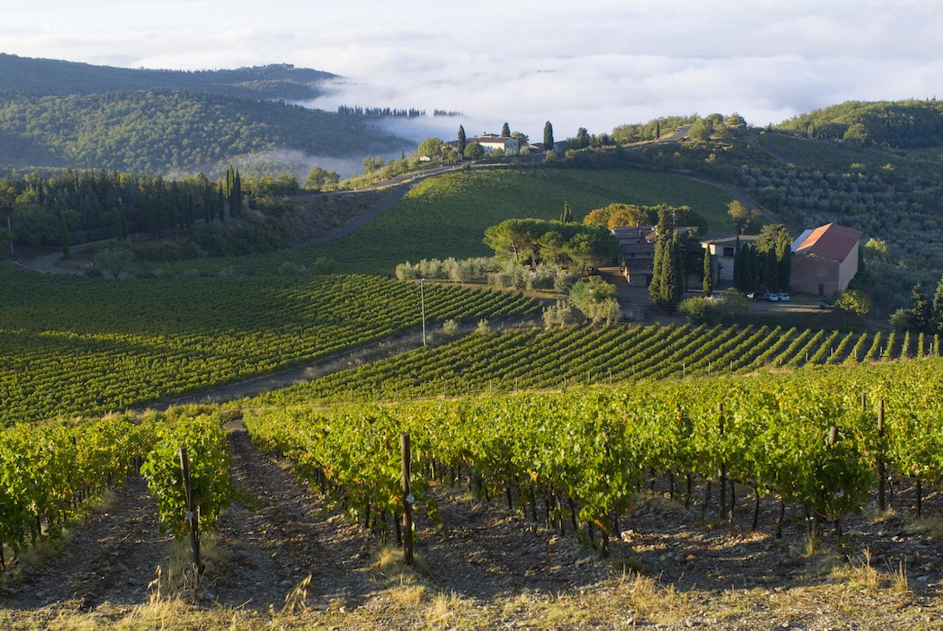 Private Tour of California Wine Country