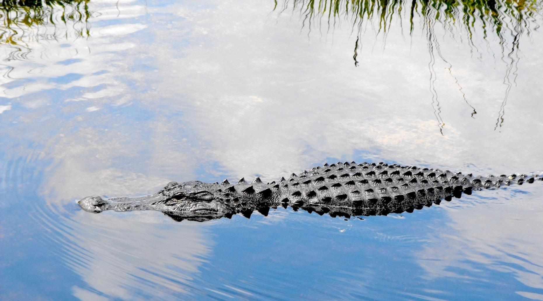 1.5-Hour Private Everglades Airboat Tour