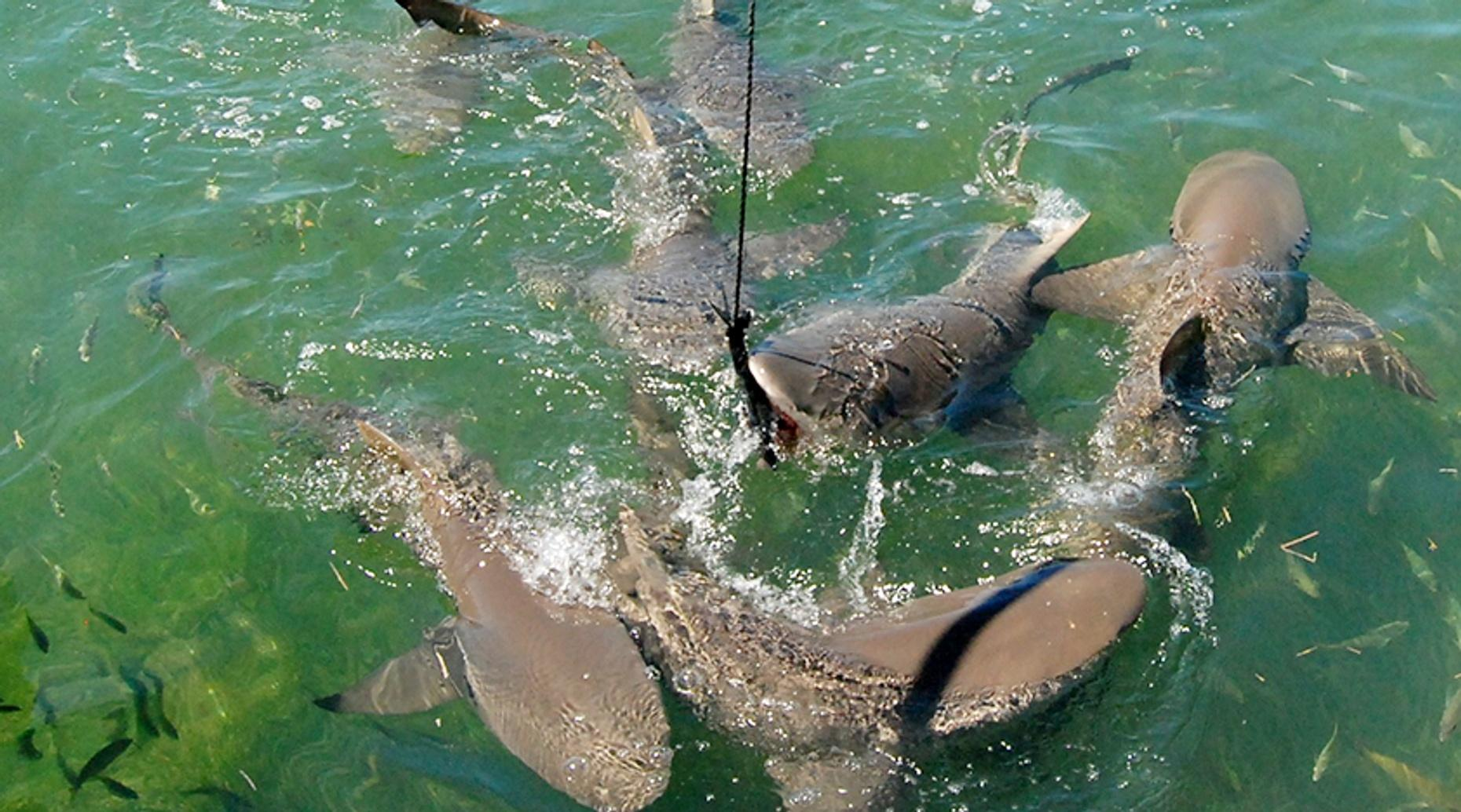 Shark & Wildlife Ecotour in Key West