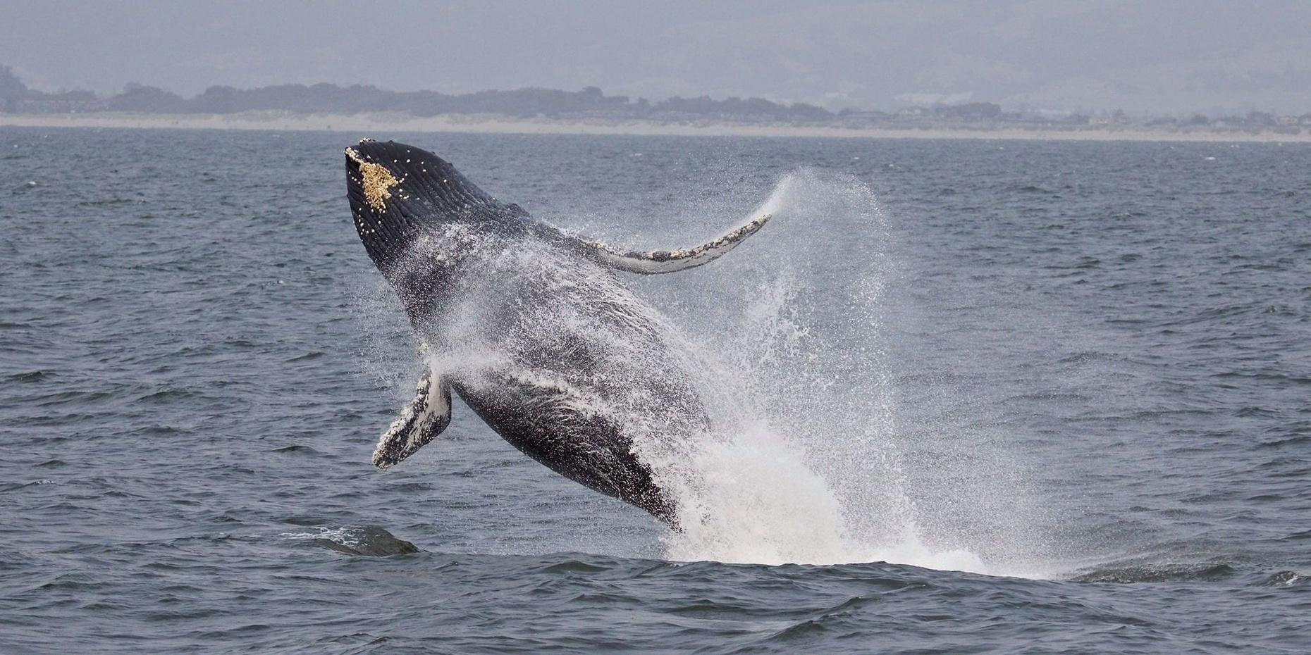 Whale-Watching Cruise in Monterey Bay