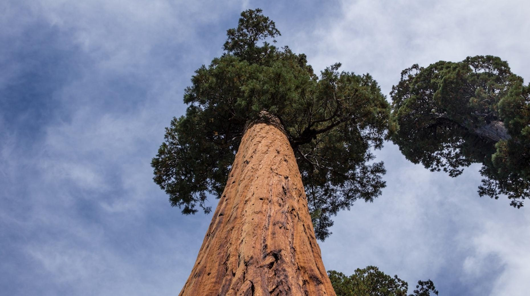 Sequoia National Forest Walking Tour
