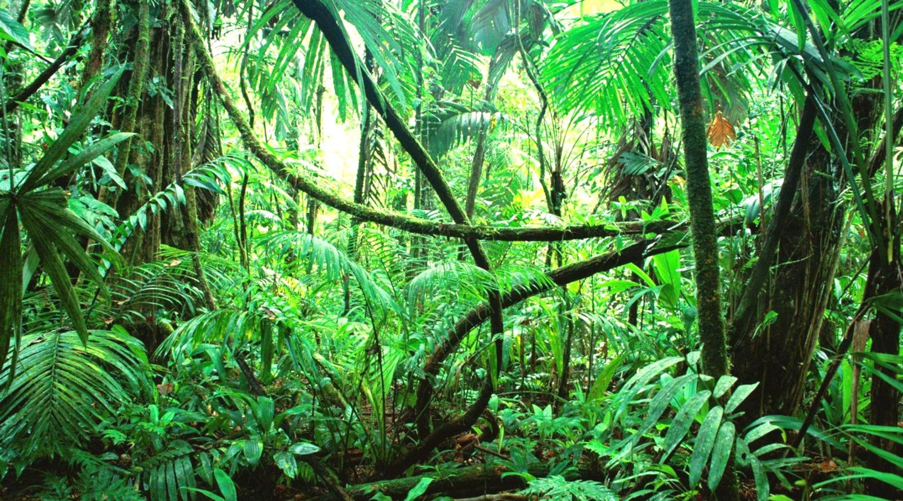 Ancient Mayan City & Calakmul Biosphere Tour in Campeche
