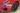 JAGUAR F-TYPE R-Dynamic X152 R-Dynamic 221kW Convertible 2dr Quickshift 8sp RWD 2.0T [MY20]