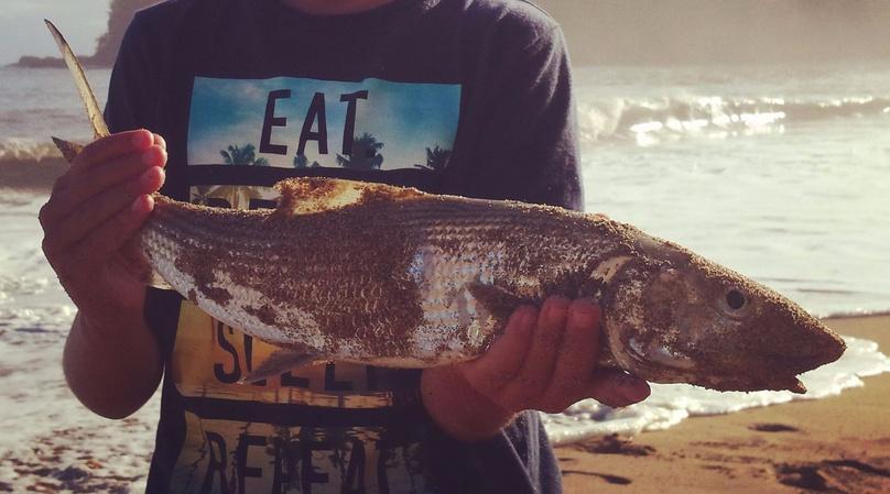 Shoreline Fishing Adventure on Kauai